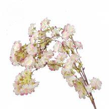 Fehér cseresznyevirág, rózsaszín szélű