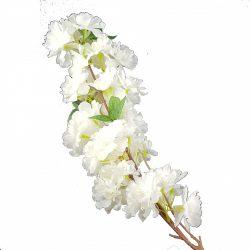 Fehér cseresznyevirág