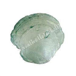 Kagylóhéj, zöld, 2 méret
