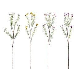 Selyemvirág, wax fű