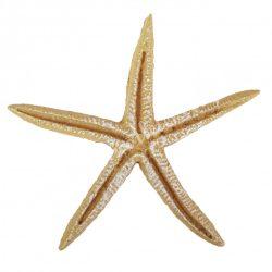 Ragasztható tengeri csillag, bézs, 6,8x6,8 cm