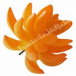 Beszúrós narancssárga pozsgás, nagy
