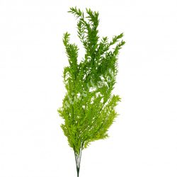 Zöld futó növény