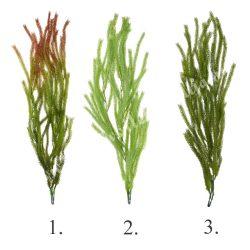 Futó növény csokor, 87 cm (3 féle)