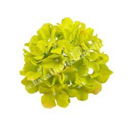 Hortenzia fej, zöld