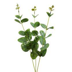 Eukaliptusz, 3 ág/csokor, 55 cm