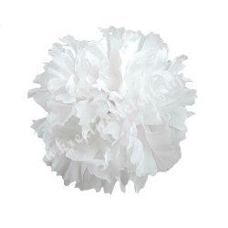 Betűzős szegfű, fehér