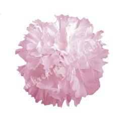 Betűzős szegfű, rózsaszín