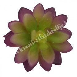 Pozsgás, lila-zöld, 7x4 cm