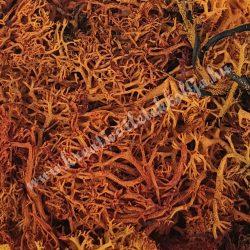 Izlandi moha, narancs, 20 gr/csomag