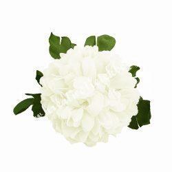 Leveles krizantém virágfej, fehér