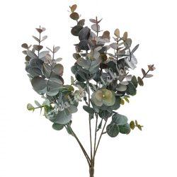 Eukaliptusz bokor, mályvás, 34 cm