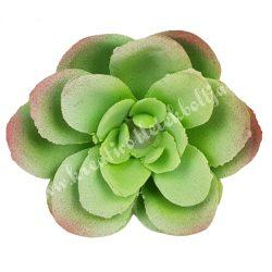Kövirózsa, halványzöld-rózsaszín, 6x2,5 cm