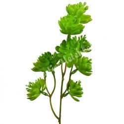 Betűzős kövirózsa, szálas, zöld, kb. 45 cm