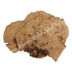Taplógomba, natúr, 8-10 cm