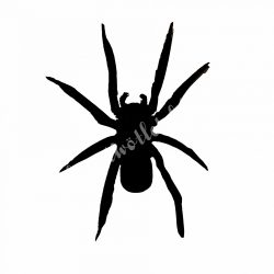 Dekorgumi pók