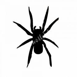 Filc pók