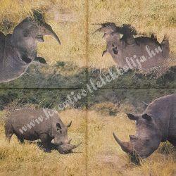 Szalvéta, vadállatok 10., orrszarvú, 33x33 cm