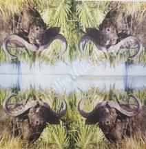 Szalvéta, vadállatok, kafferbivaly, 32x32 cm, 1 darab