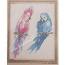 Textiltranszfer, papagáj, 25x35 cm