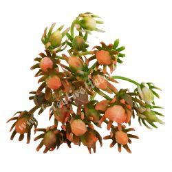 Betűzős selyemvirág csokor, 20 cm, 5 ág/csokor